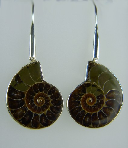 Ammonite Earrings - Large ammonite earrings in silver