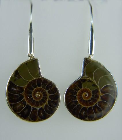 Ammonite Earrings - Large ammonite earrings in silver